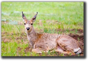Wildlife  by S. W. Krull Imaging