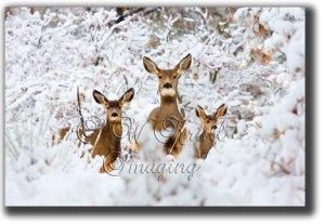 Deer-Trio