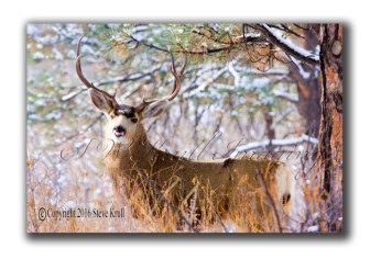 winter-buck