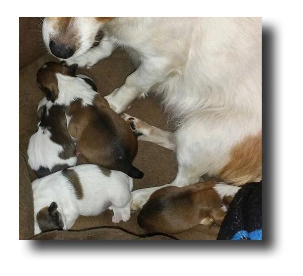 Dot & Puppies