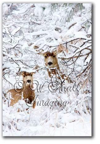 Winter Deer.jpg