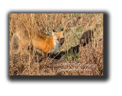 Mama and baby fox