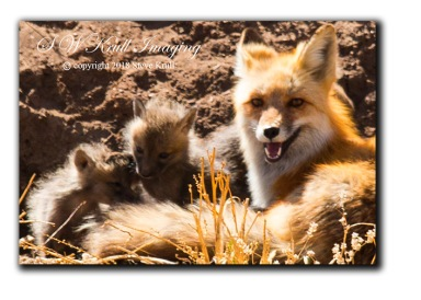 Fox and Kits