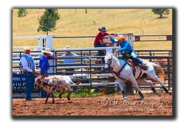 Steer Roping at the Top of the World Rodeo
