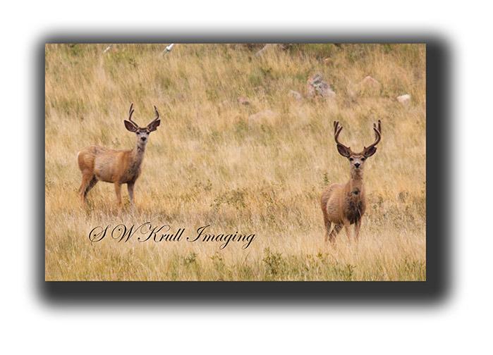Morning Bucks
