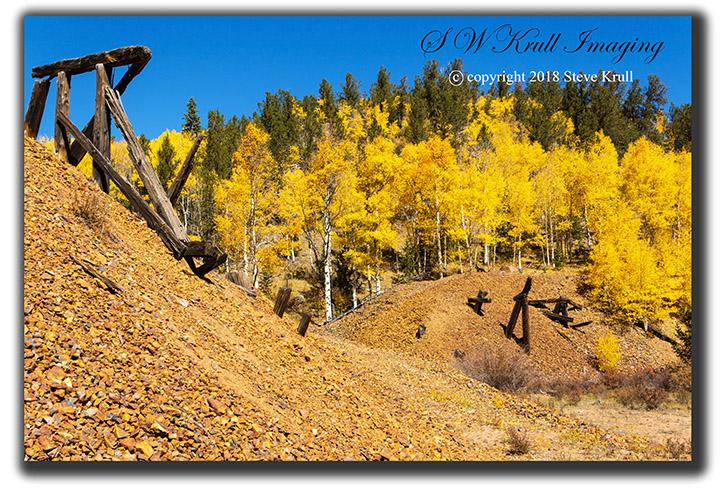 Golden Aspen of Autumn in Colorado