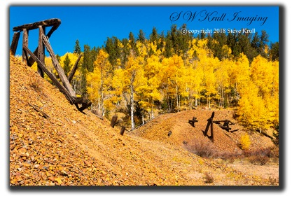 Golden Aspen of Autumn in Colorado