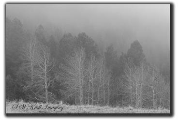 Misty Mountain Wilderness