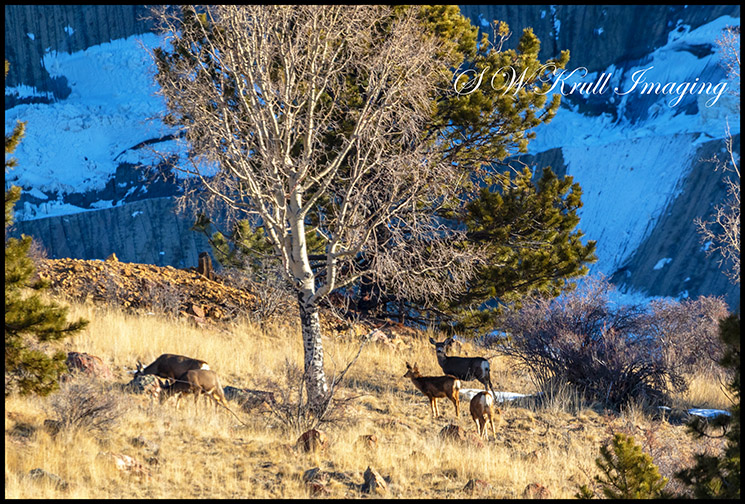 Deer on the Mountainside Title