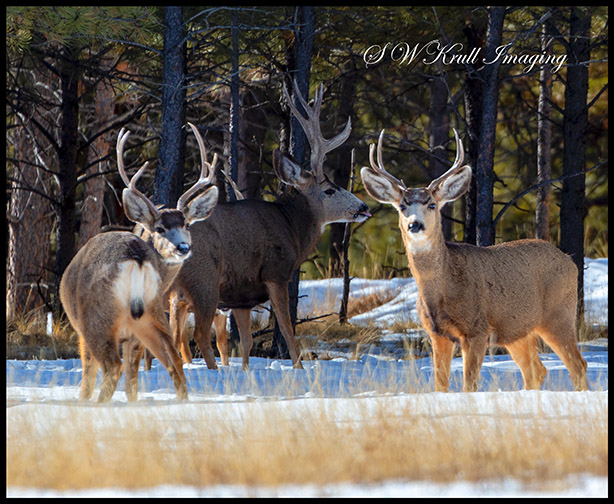Herd of Deer on a Winter Morning