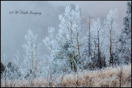 Frosty Rocky Mountain Forest
