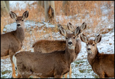 Winter Storm Deer