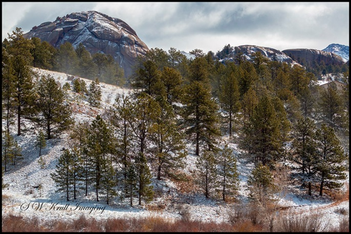 Winter in the Pike National Forest