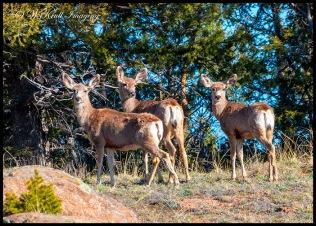Herd of Deer on the Mountainside