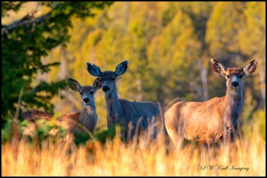 Deer on a Warm Colorado Spring Morning