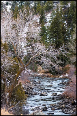 Pristine Waters of the South Platte River in the Colorado Rocky Mountain Winter