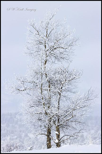 Heavy Snow in the Colorado Rockies
