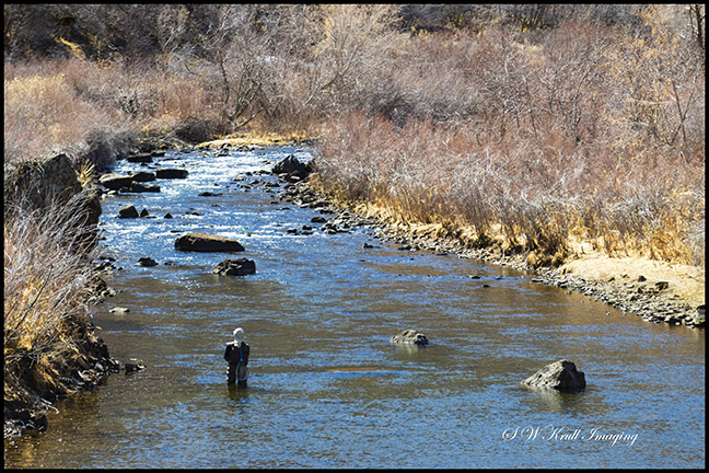 Fly Fisherman in the South Platte River