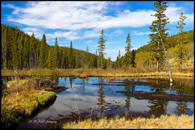 Beaver Ponds on the Anne-Marie Trail