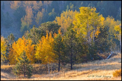 Fall Colors in the Rockies