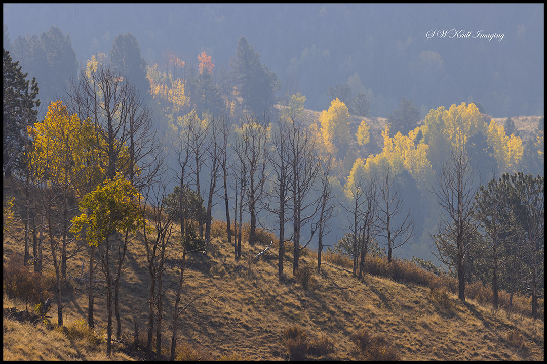 Autumn Gold Above Treeline in the Pike National Forest of Colorado