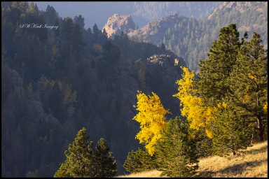 Autumn Gold Above Treeline