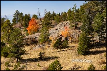 Pony Gulch Trail in Autumn