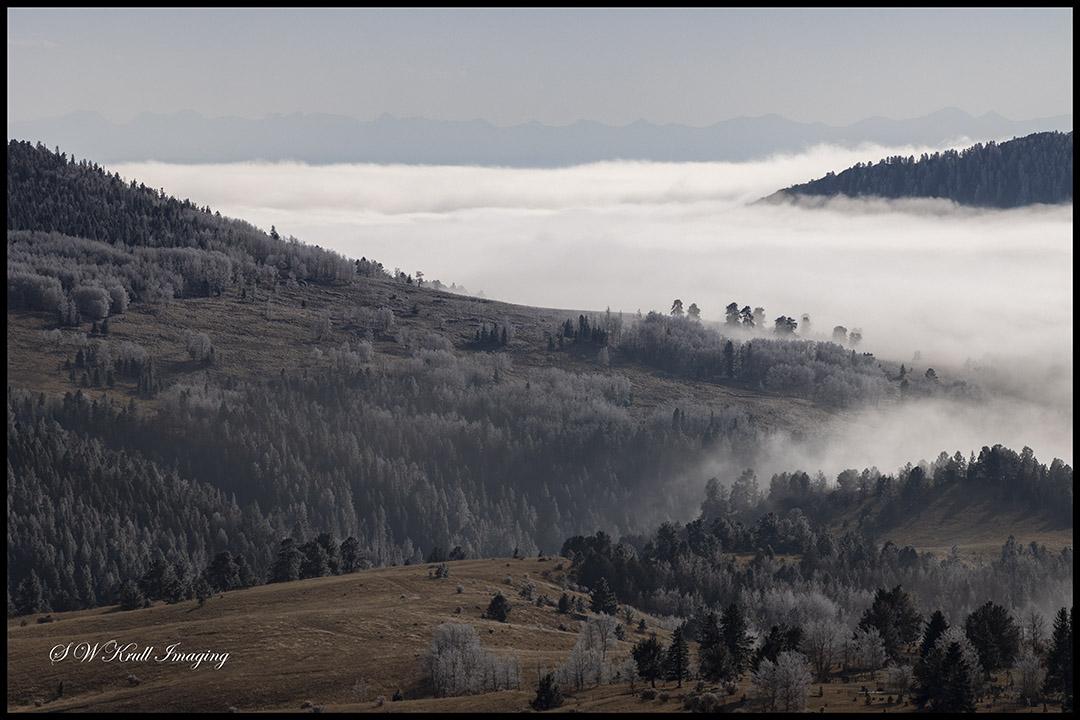 Frosty Fog