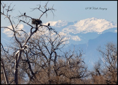 Eagle Population at Barr Lake