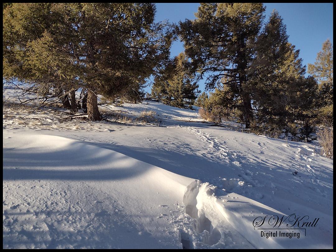 Snowy Traill