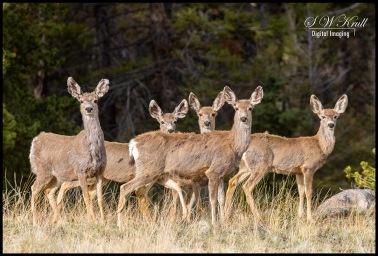 Herd of Curious Deer