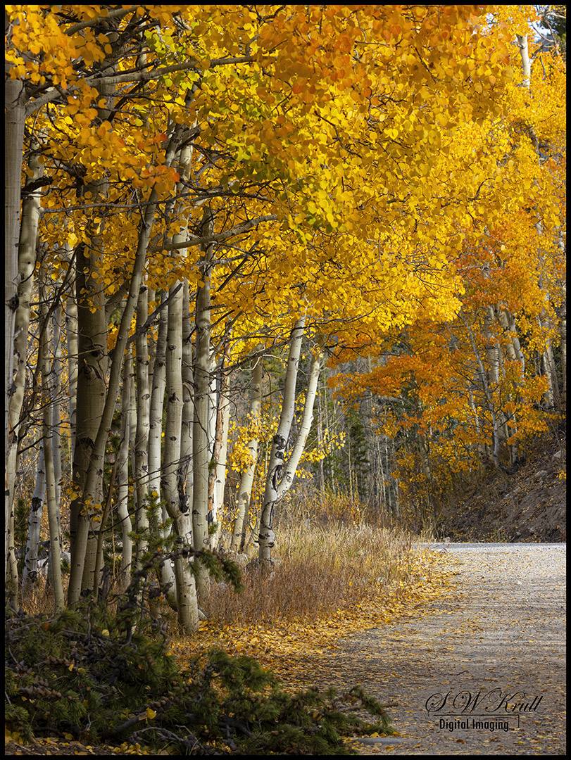 Autumn in the San Isabel National Forest